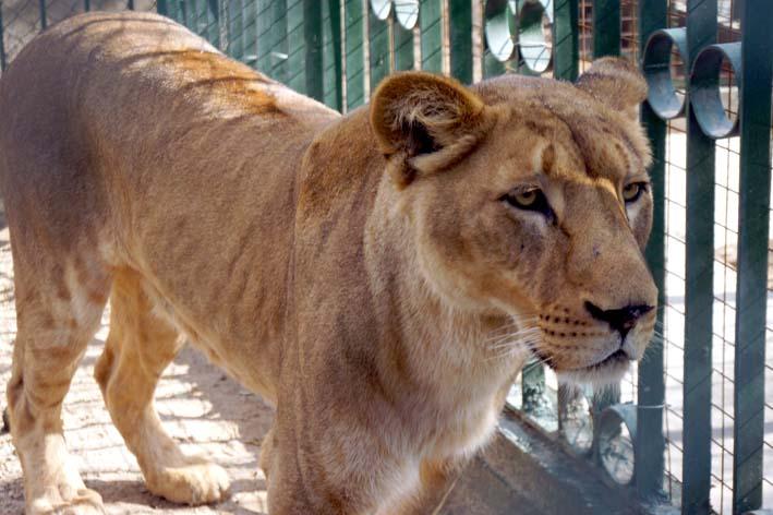 leons3