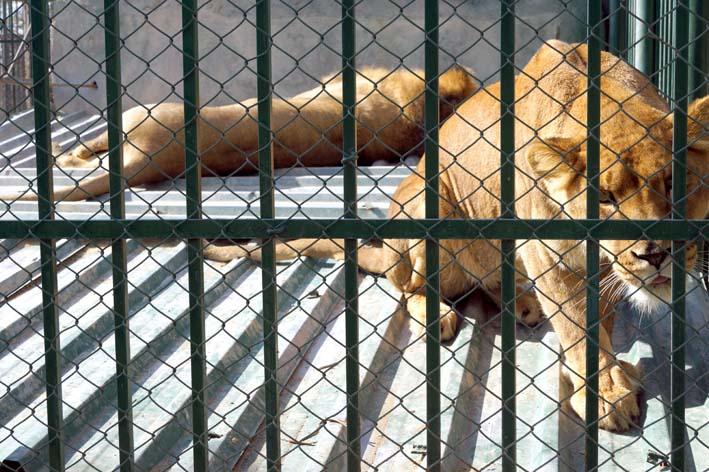 leons4