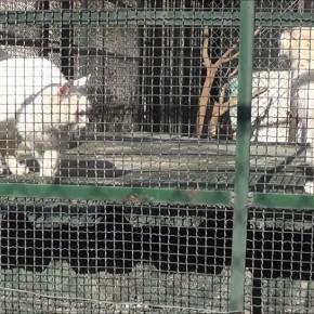 Правда о зоопарке Дамаска