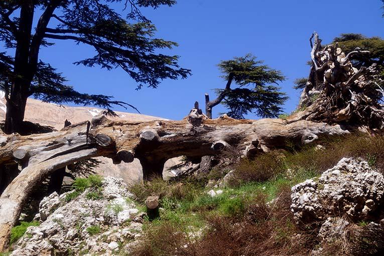 Достопримечательности Ливана