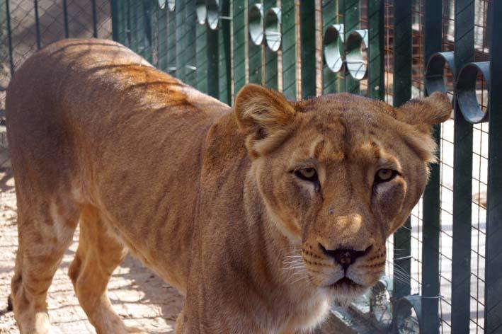 Путешествие в поисках съеденного льва