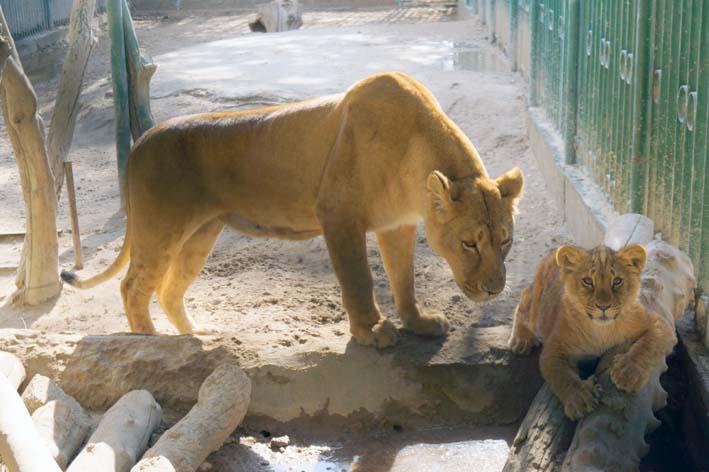 leons1